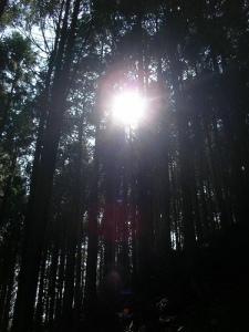 Shishikurayama Trek (Okutama) 鹿倉山トレッキング(奥多摩)