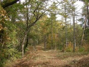 Ohgiyama Trek(Yamanashi) 扇山トレッキング(山梨)