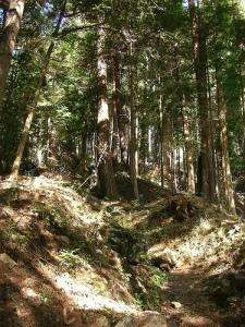 Mt.Kumotoriyama Trek 丹波からサオラ峠へ(雲取山縦走)