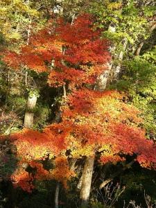 三条の湯から三条ダルミへ(雲取山縦走) Mt.Kumotoriyama Trek
