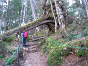 Mt.Kumotoriyama Trek 雲取山荘から雲取山の山頂へ(雲取山縦走)