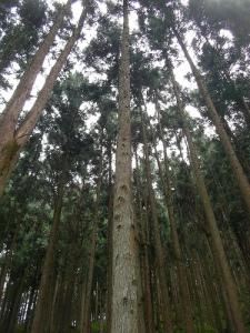 「中央区の森」体験ツアー(檜原村) Hinoharamura village Chuo City's Forrest Tour